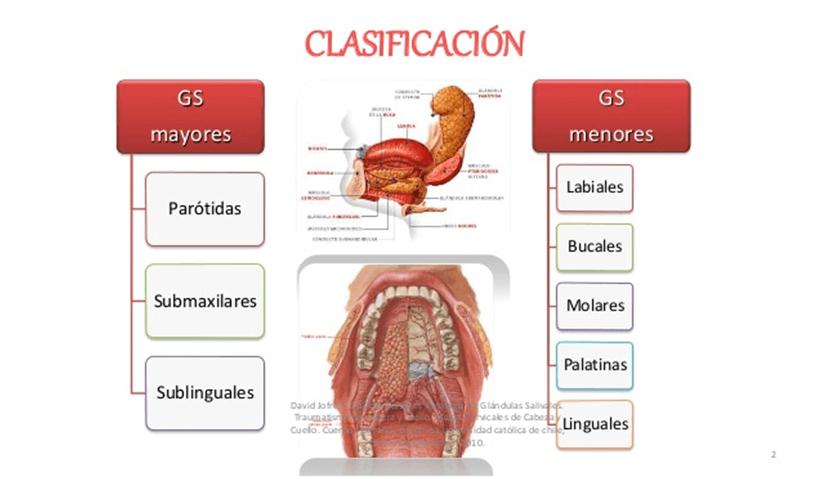 Bonito Glándulas En El Cuello Inspiración - Anatomía de Las ...