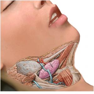 patologia tumoral benigna